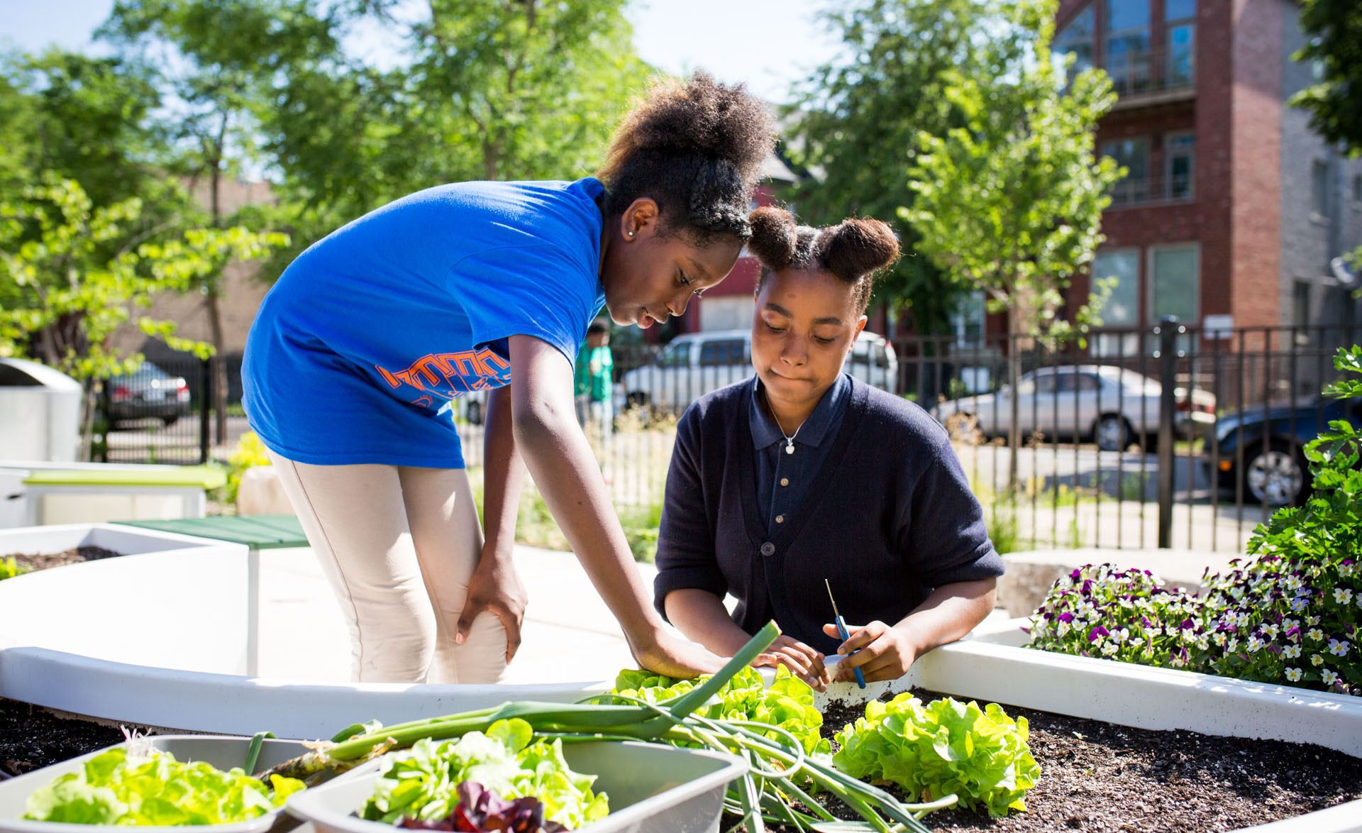 students gardening Chicago school