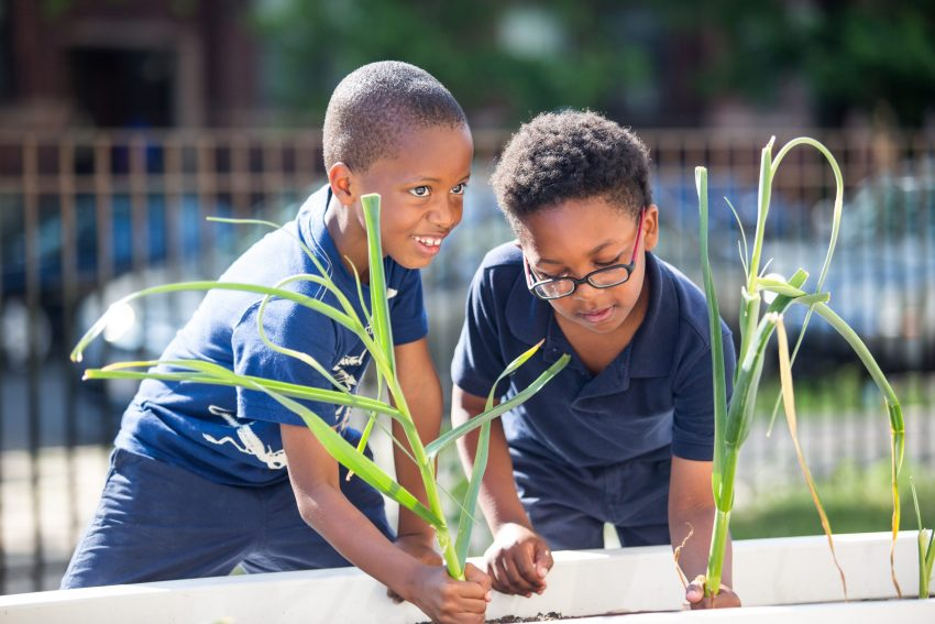 two African-American students pulling produce from a school garden in Chicago